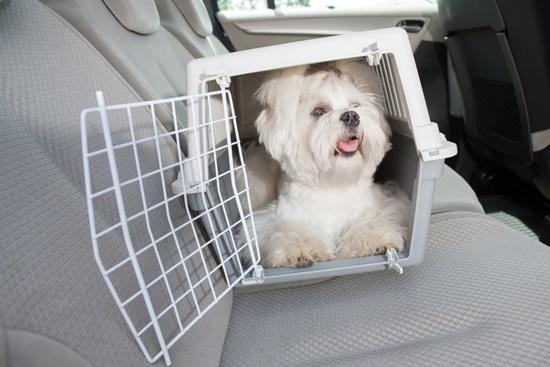Como transportar adequadamente seu pet no carro