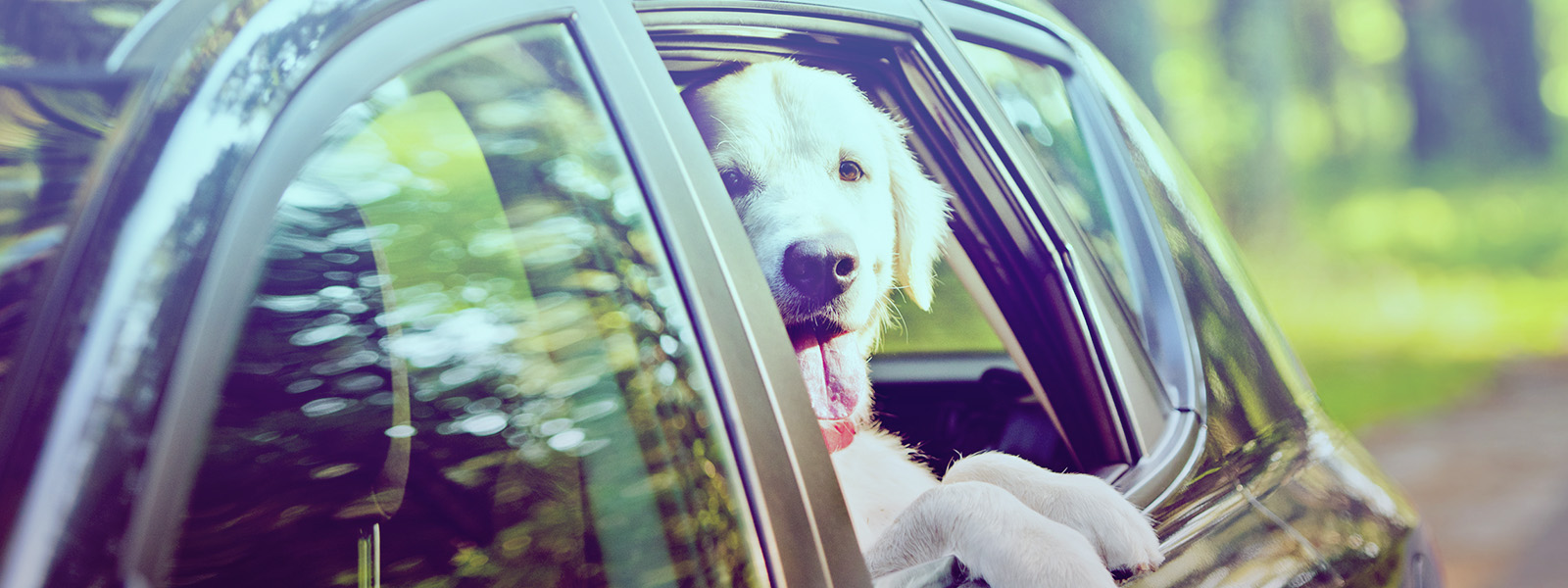 Como transportar adequadamente seu pet no carro